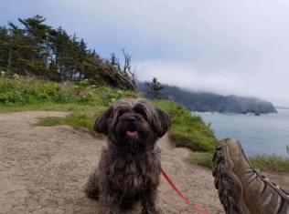 Cash hiking on the Oregon Coast