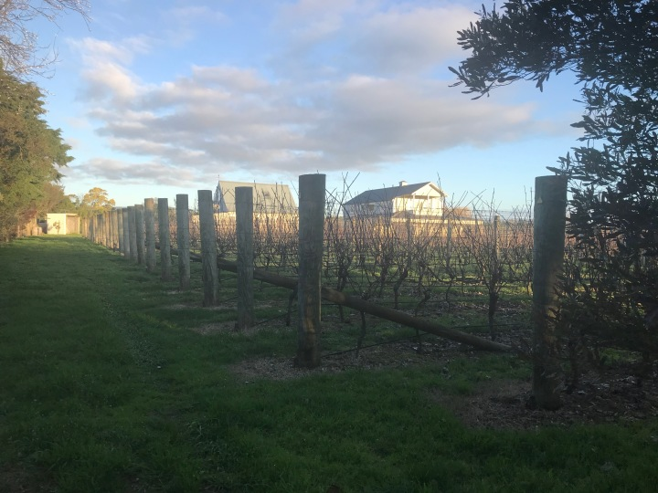 Wine Tasting in Martinborough, New Zealand